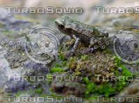 little_frog.JPG