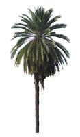 palm-tall.jpg