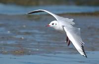 seagulls.wav