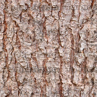 tree bark 65b.jpg