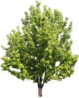 tree53