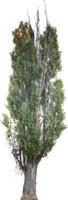 tree67