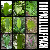 tropical_leaves.zip
