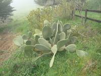 turbo cactus.JPG