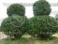 Tree 20090119 159