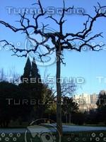 Tree 20090121a 066