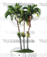 Tropical Palm