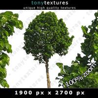 Summer Tree 02 High Resolution