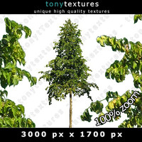 Summer Tree 04 High Resolution