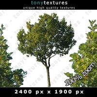 Summer Tree 06 High Resolution