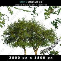 Summer Tree 09 High Resolution