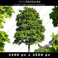 Summer Tree 12 High Resolution