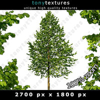 Summer Cutout Tree 28 High Resolution