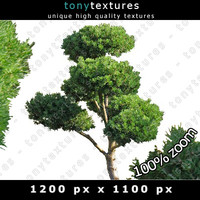 Coniferous Wood Texture - High Resolution Softwood