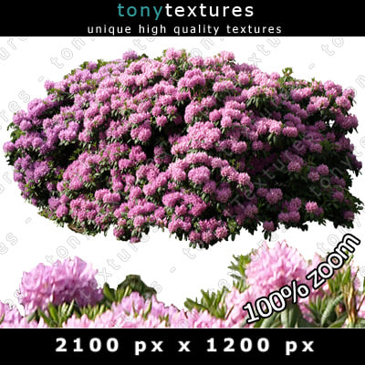 Flower Shrubs Png Flower Shrubs Png Texture Jpg