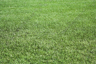 GRASS_A4.jpg