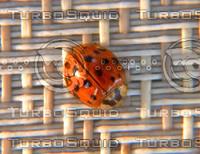 Ladybug top.jpg