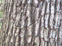061608-bark.zip
