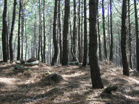 Pinewood06.jpg