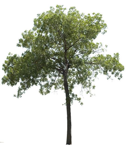 Texture psd tree foliage: www.turbosquid.com/FullPreview/Index.cfm/ID/421818