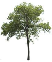 Tree01.zip