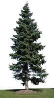 Spruce.zip