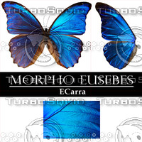 Butterfly Morpho Eusebes