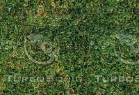 Grass #8