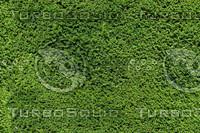 Garden Hedge #1