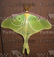 Luna Moth Top