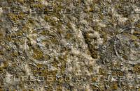 Mossy Rock #1