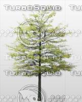 Skinny Tree.png