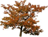 tree54