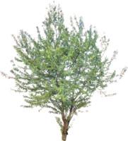 tree58