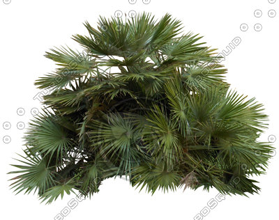 tree5_thumb.jpg
