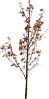 tree65