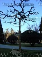 Tree  20090121a 060
