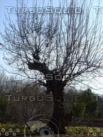 Tree 20090121b 077