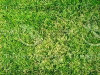 Lawn  20090405 011