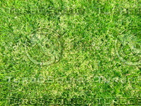 Lawn  20090405 014