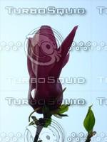 Flower 20090405 028