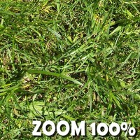 Perfect High Resolution Grass