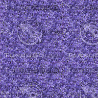 Clematis flowers seamless pattern