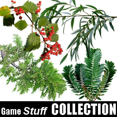 Collection_branch_02.jpg
