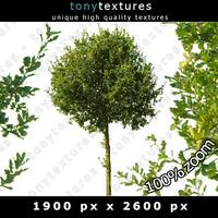 Summer Tree 01 High Resolution