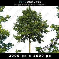 Summer Tree 10 High Resolution