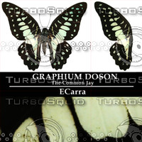 Butterfly Graphium doson