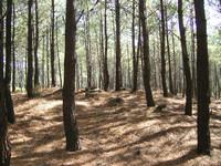 Pinewood05.jpg