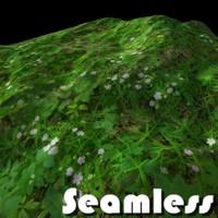 Forest Grass Texture 3