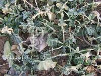 Plant cz5 089